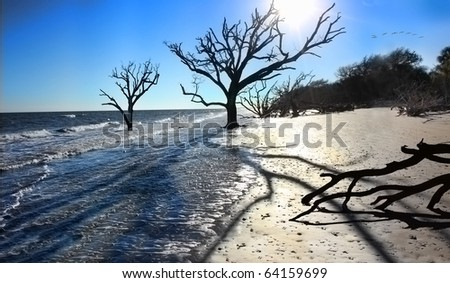 Beach Erosion: Oak trees in the surf due to changing tide levels - stock photo
