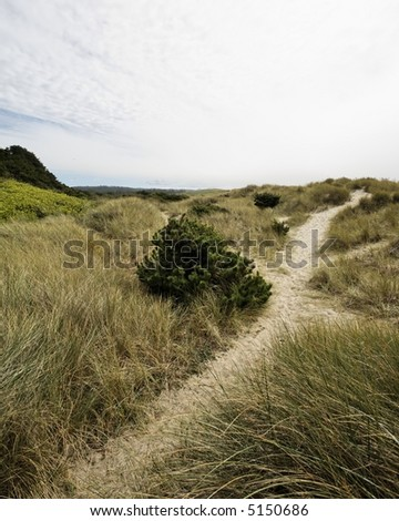 Beach foot path trail leading to the Ocean in the distant horizon - the perfect private vacation getaway - stock photo