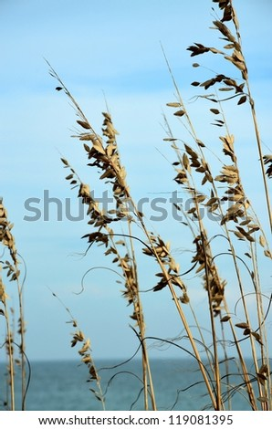 Beach grass along the North Carolina Coast - stock photo