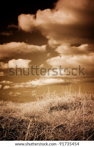 Beach grass, dune, sky and clouds.
