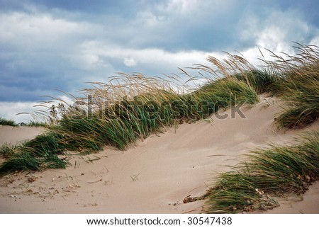 beach grass in the wind - stock photo