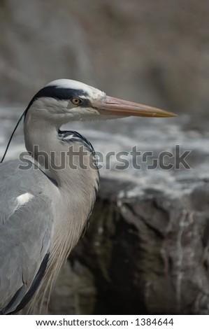 Beach Hunter doing a spot of fishing - stock photo