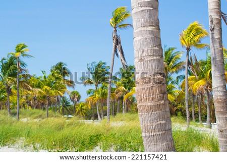 Beach in Miami Beach, the USA, Florida. - stock photo