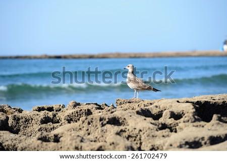 Beach in Morocco near to Sidi Ifni - stock photo