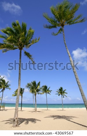 Beach in tropical Florida day with palm trees - stock photo