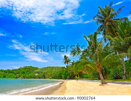 Beach landscape with exotic palm trees on the sand. Summer nature view.