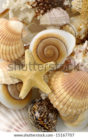 Beach objects. Shells isolated on white - stock photo