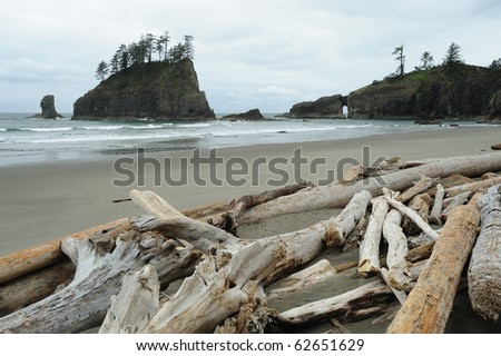 Beach of pacific coast in olympic national park, washington, usa