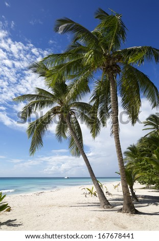 Beach on the tropical island. Clear blue water, sand and palm trees. Beautiful vacation spot.