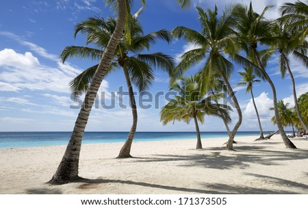 Beach on the tropical island. Clear blue water, sand and palm trees. Beautiful vacation spot - stock photo