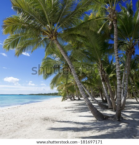 Beach on the tropical island. Clear blue water, sand and palm trees. Excellent place for water sports, treatment and rest.