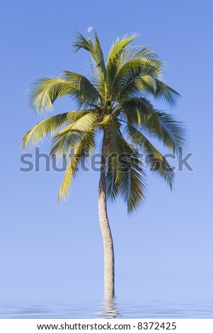 beach palm with moon in water sea - stock photo