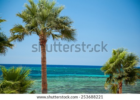 Beach palms - closeup shot - stock photo