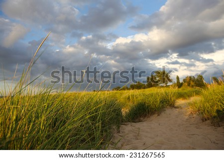 Beach path through the dune grasses. Focus on the grass in foreground - stock photo