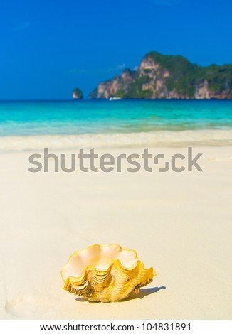 Beach Pearl Tropical Symbol - stock photo