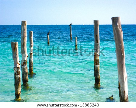 beach pier posts with birds - stock photo
