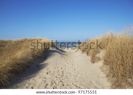 Beach sand dune grasses and the sea
