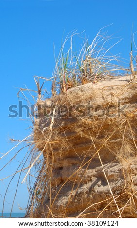 Beach sand dune grasses on cliff with blue sky
