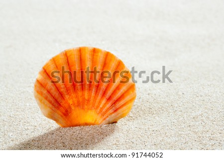 beach shell in white sand like a summer vacation background - stock photo
