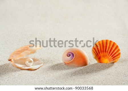 beach summer vacation background shell pearl clam snail tropical symbol - stock photo
