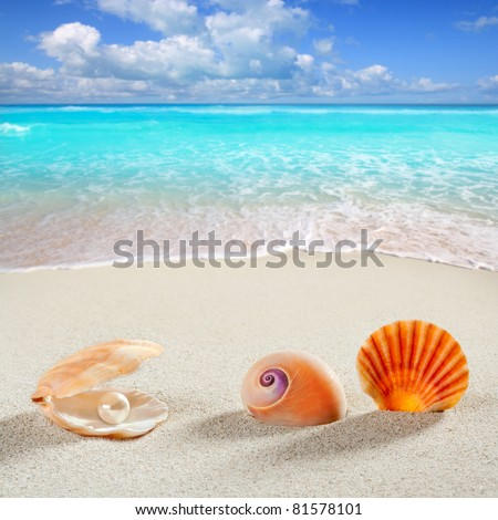 beach summer vacation background shell pearl clam snail tropical symbol [Photo Illustration] - stock photo