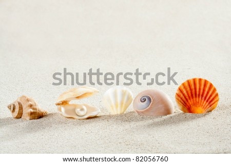 beach summer vacation background with shells pearl and snail like a tropical symbol - stock photo