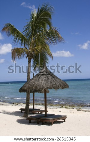 Beach sunshade and palm tree - stock photo