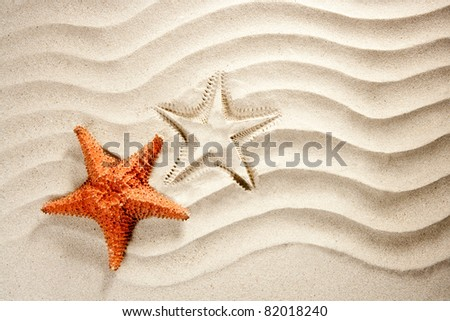 beach white wavy sand with starfish such a summer vacation symbol - stock photo