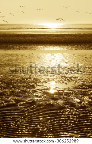beach with birds - stock photo