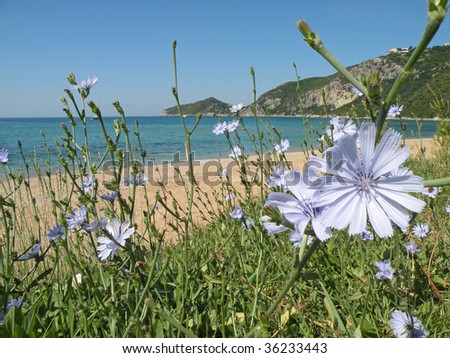 Beach with blue flowers - stock photo