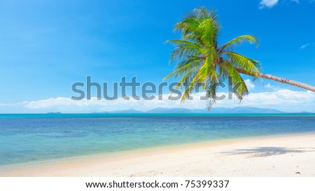 beach with coconut palm and sea. 16x9 wide-screen aspect ratio