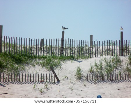 Beach with fence and seagull - stock photo