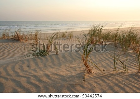 Beach with grass at sunset and sea in the background - stock photo