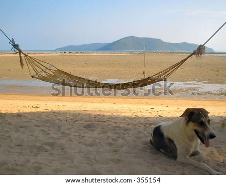 Beach with hammock and dog. - stock photo