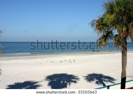 Beach with palm tree in Madeira Beach Florida. - stock photo