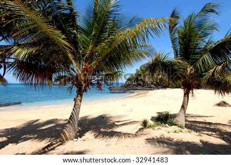 beach with palm trees in Madagascar