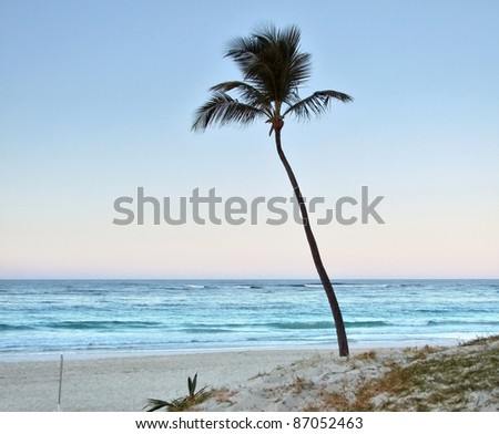 beach with single palm tree at the Dominican Republic, a island of Hispanola wich is a part of the Greater Antilles archipelago in the Carribean region - stock photo