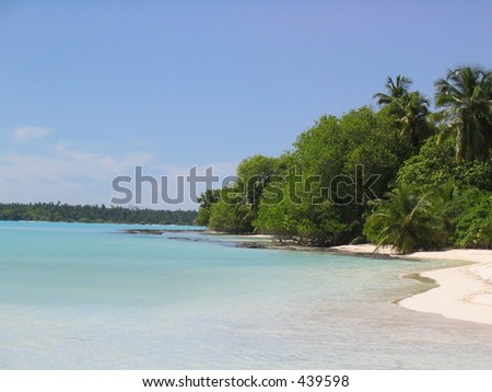 beach with trees