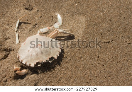 beached dead crab on a sandy shore