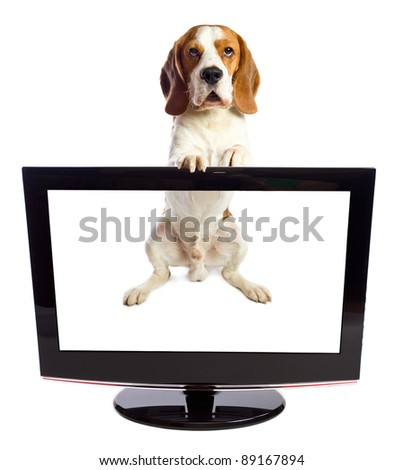 beagle and black monitor on a white background.