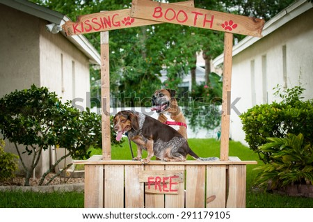 Beagle and Boxer dogs at a kissing booth. - stock photo