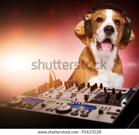 Beagle dog wearing headphones behind DJ mixer. - stock photo