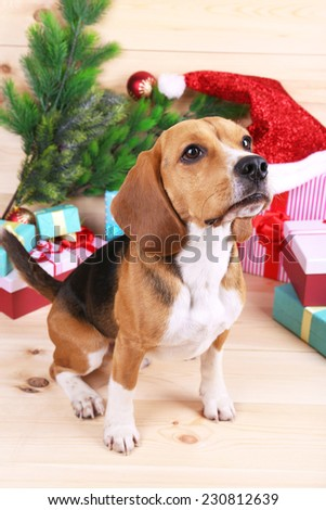 Beagle dog with Christmas gifts on wooden background - stock photo