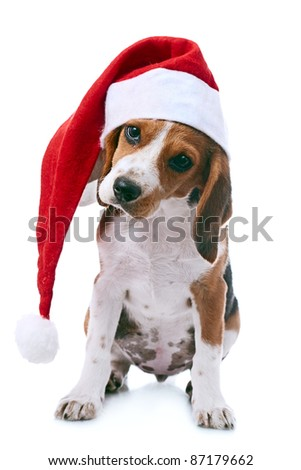 beagle puppy in santa red hat over white background - stock photo