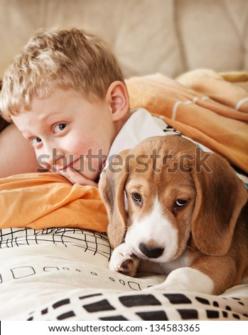 Beagle puppy lying in bed with happy little boy - stock photo