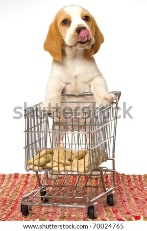 Beagle puppy pushing shopping cart filled with dog food - stock photo