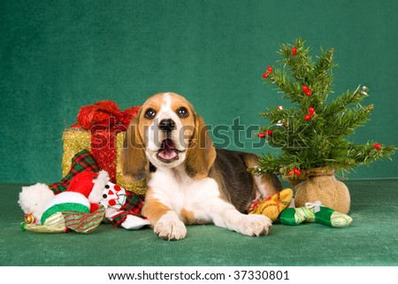 Beagle puppy with Christmas gift, tree and toys on green background