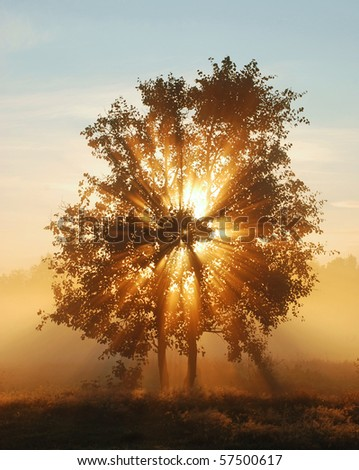 Beams of morning sun filtering through the tree and fog. - stock photo