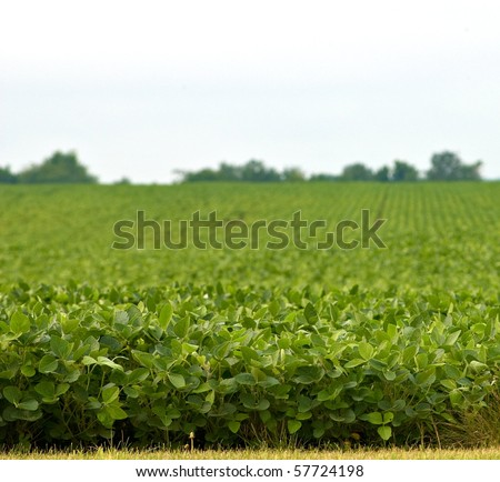 Bean field with shallow depth of field - stock photo