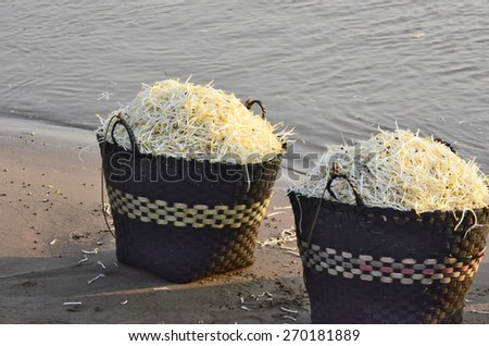 Bean sprout basket in morning light - stock photo